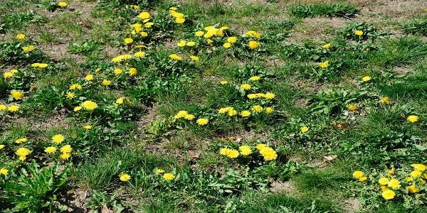 Weeds.jpg
